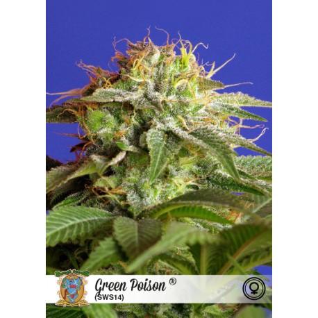 Semillas de marihuana Green Poison