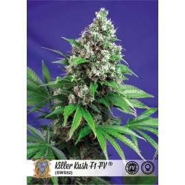 Killer Kush Fast Version (3 semillas + 1 gratis)