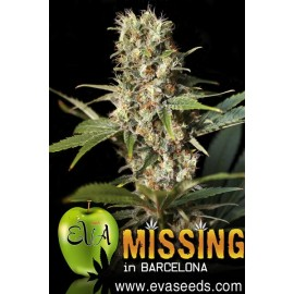 Missing en Barcelona de Eva Seeds