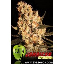 Semillas de marihuana Jamaican Dream
