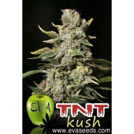 TNT Kush de Eva Seeds