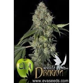 White Dragon de Eva Seeds