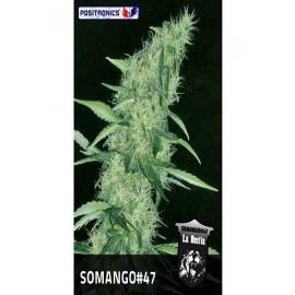 La bestia Somango 47