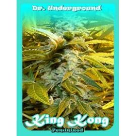 Semillas King Kong de Dr Underground