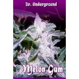 Semillas de marihuana Melon Gum