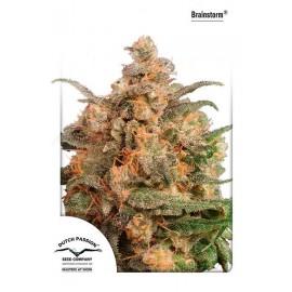 Semillas de cannabis Brainstorm