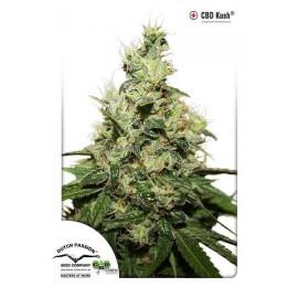 Semillas de marihuana medicinales CBD Kush