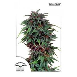 Semillas de marihuana Durban Poison