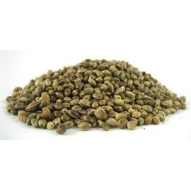 Semillas a granel Somango x Critical
