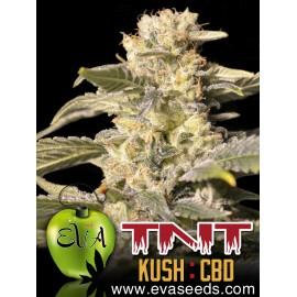 TNT Kush CBD (3 semillas)