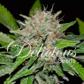 deep mandarin CBD de Delicious Seeds