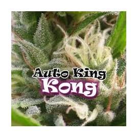 Auto King Kong de Dr Underground