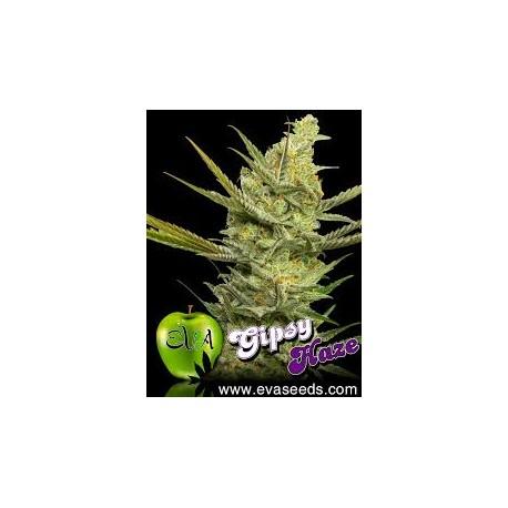 Gipsy Haze (3 semillas)