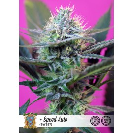 + Speed Auto de Sweet Seeds