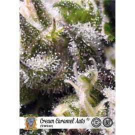 Semillas autoflorecientes Cream Caramel Auto