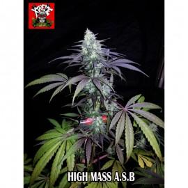 High Mass Superauto (3 semillas)