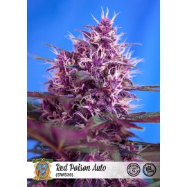 Semillas Red Poison Auto