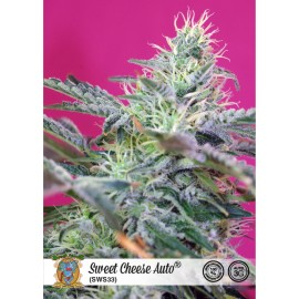 Sweet Cheese Auto de Sweet Seeds