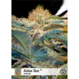 Semillas de marihuana Mohan Ram