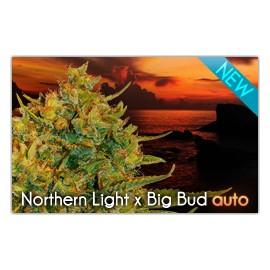 Northern Light x Big Bud Auto (3 semillas)