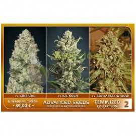 Feminized Collection 2 de Advanced Seeds