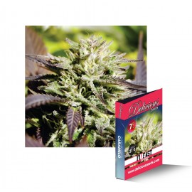 Caramelo F1 Fast Version de Delicious Seeds