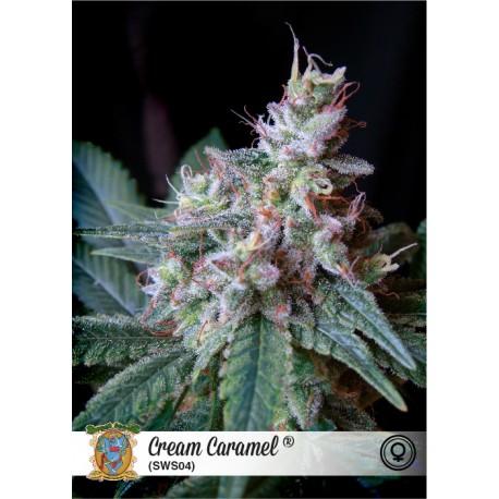 Semillas de marihuana Cream Caramel
