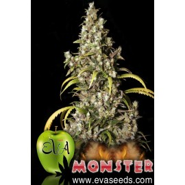 Semillas de marihuana Monster