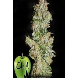 Semillas de marihuana Nexus