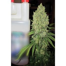 Semillas de marihuana Prozack