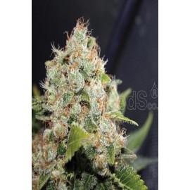 Semillas de cannabis Sour Diesel