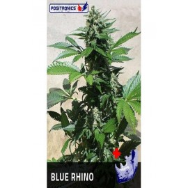 Semillas feminizadas Blue Rhino