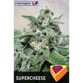 Semillas feminizadas Super Cheese