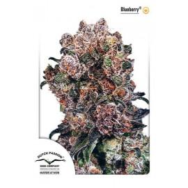 Semillas de marihuana Blueberry