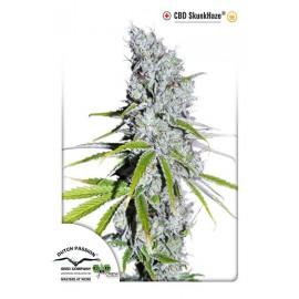 Semillas de marihuana medicinales CBD Skunk Haze