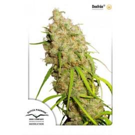 Semillas de marihuana Desfran