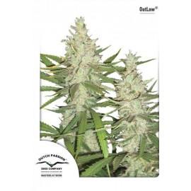 Semillas de marihuana Outlaw