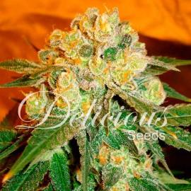 Semillas de marihuana Marmalate