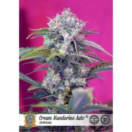 Cam Mandarine Auto de Sweet Seeds
