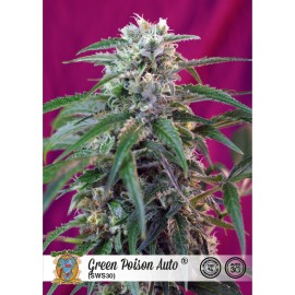 Semillas autoflorecientes Green Poison Auto de Sweet Seeds