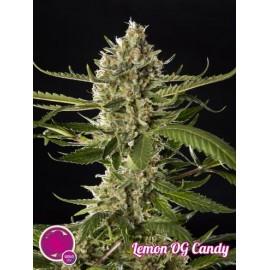 Lemon OG Candy (3 semillas)