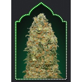 Semillas de marihuana White Widow