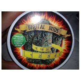 Brutal Buds