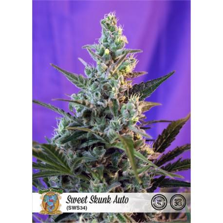 Sweet Skunk Auto de Sweet Seeds