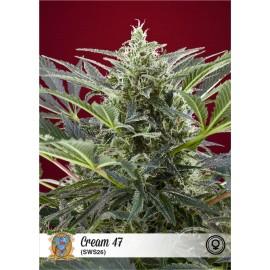 Semillas de marihuana Cream 47