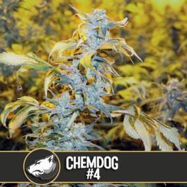 Chemdawg 4