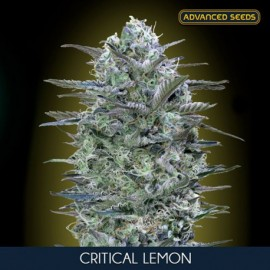 Semillas de marihuana Critical Lemon