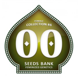 Female Collection 4 de 00 Seeds