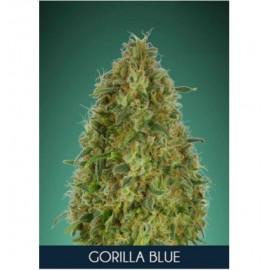Gorilla Blue