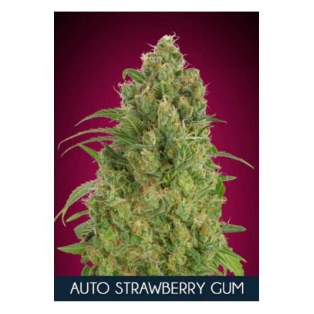 Auto Strawberry Gum